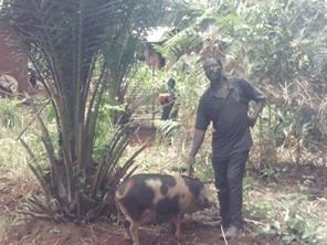 カメルーンの村に養豚の輪を広げたい