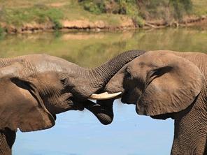 象が絶滅が危機という現実を広めるために象のウンコのアート展を開催する