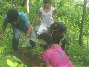 ハチミツ採取に欠かせないネパールのチウリの樹を守る