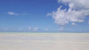 レンタルサーバーで沖縄のサンゴと自然を守る