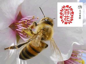 ミツバチと果樹農家との関係を守る