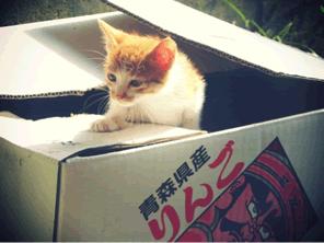 猫の殺処分をゼロに。岐阜県での民間の試み