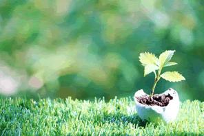 森林保全のために植樹をする