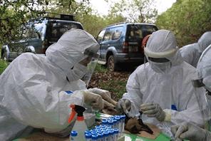 エボラ出血熱の薬の開発を支援する