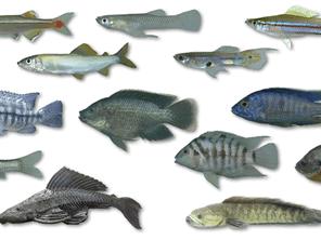 沖縄の魚を絶滅から救う