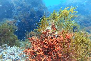 藻から作るグリーンオイルを再生可能エネルギーに利用する