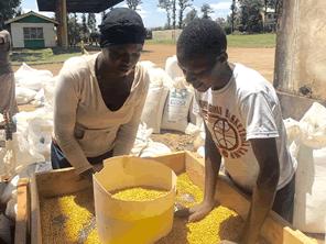 ケニアの大豆農家の技術力を高めて収入と生活の安定を目指す