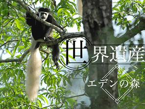 キリマンジャロのエデンの森を守る