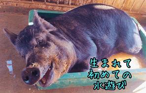 過酷な状況に耐える家畜動物に安らぎを