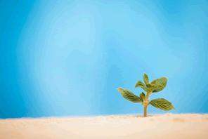 無視できない砂漠化の進行