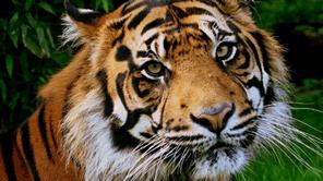 インドネシアの熱帯雨林を密猟と違法伐採から守る